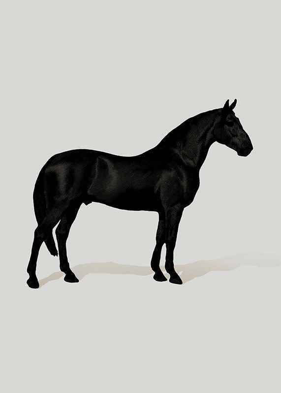 Black Horse Port. Drawing-1
