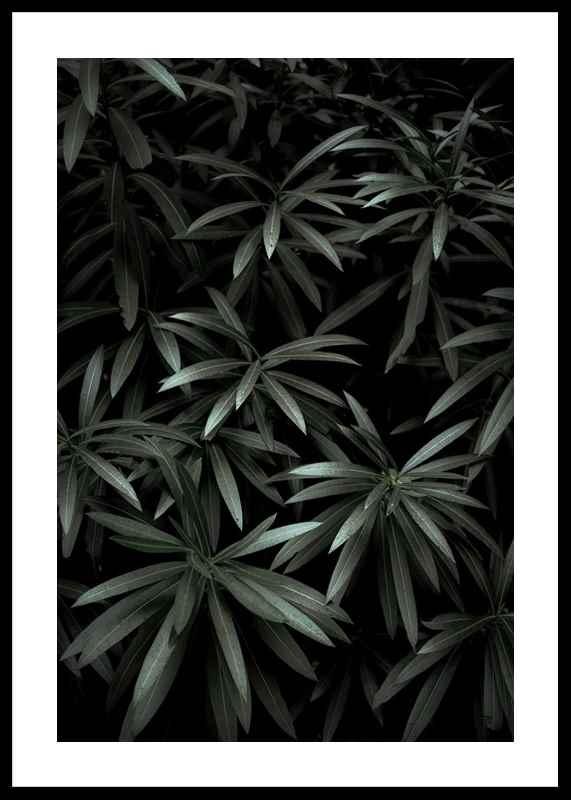 Dark Green No1-0