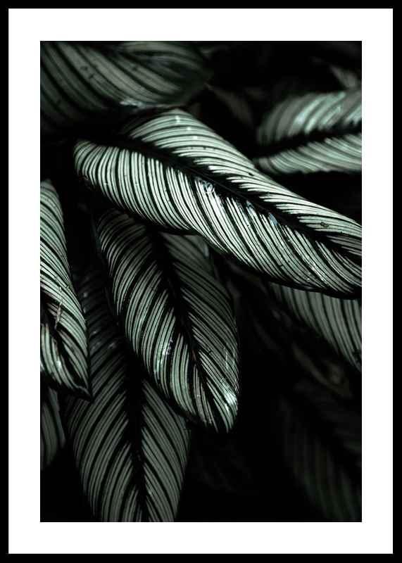 Dark Green No2-0