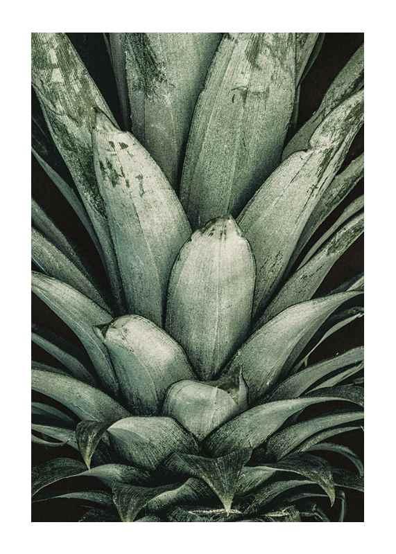 Pineapple Close-1