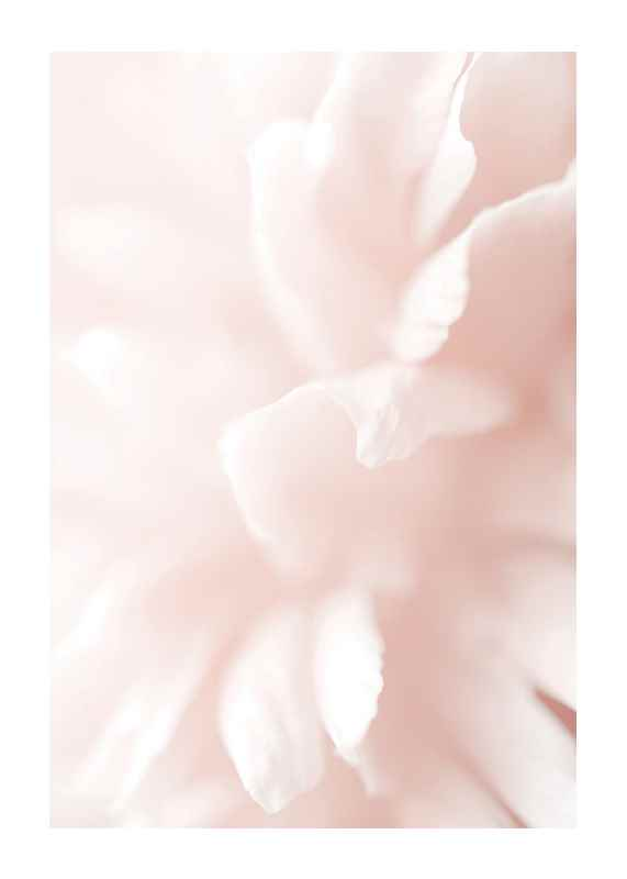Tender Flowers No3-1