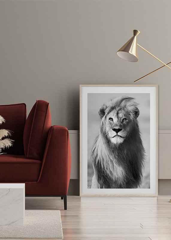 Majestic Lion-4