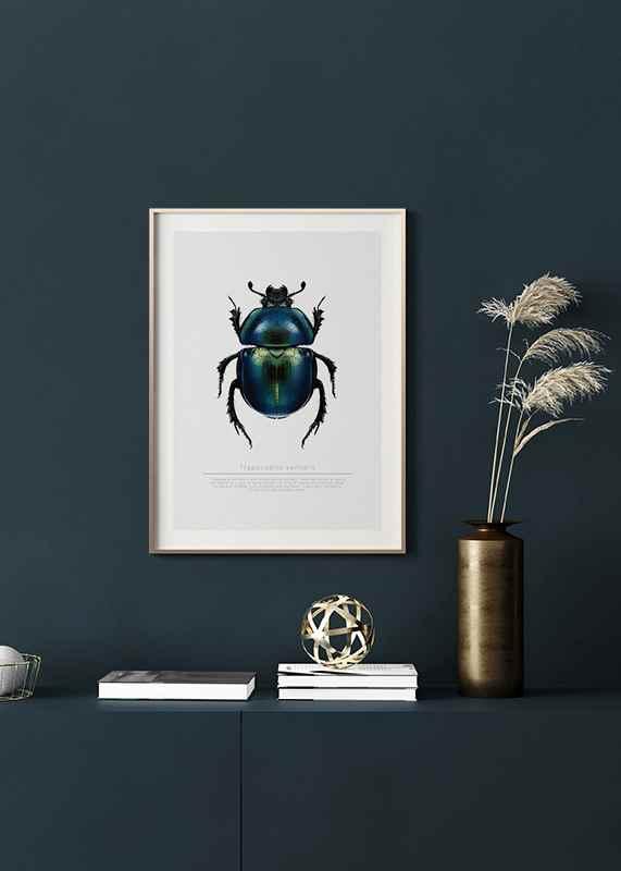 Beetle Display-4