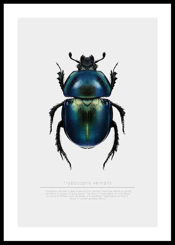 Beetle Display-0