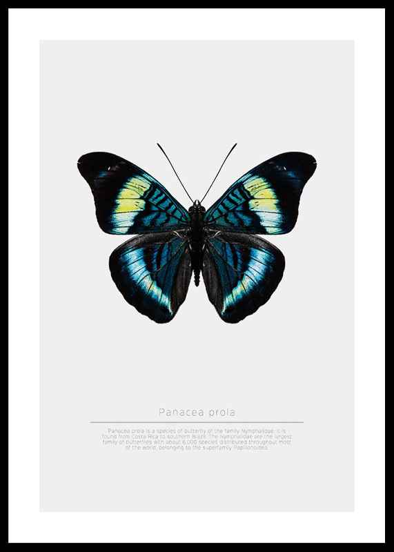 Butterfly Display