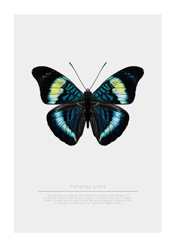 Butterfly Display-1