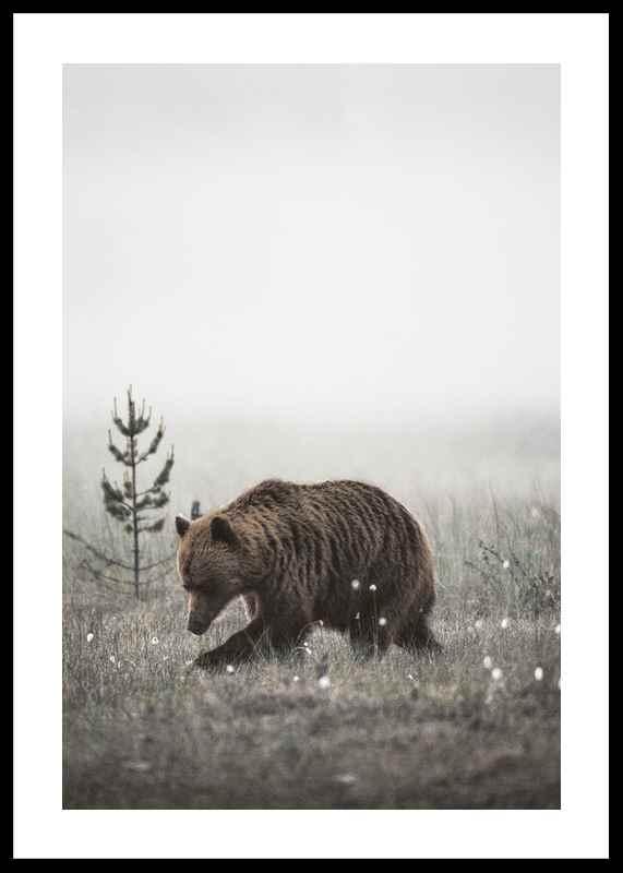Winter Bear-0