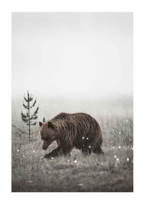 Winter Bear-1