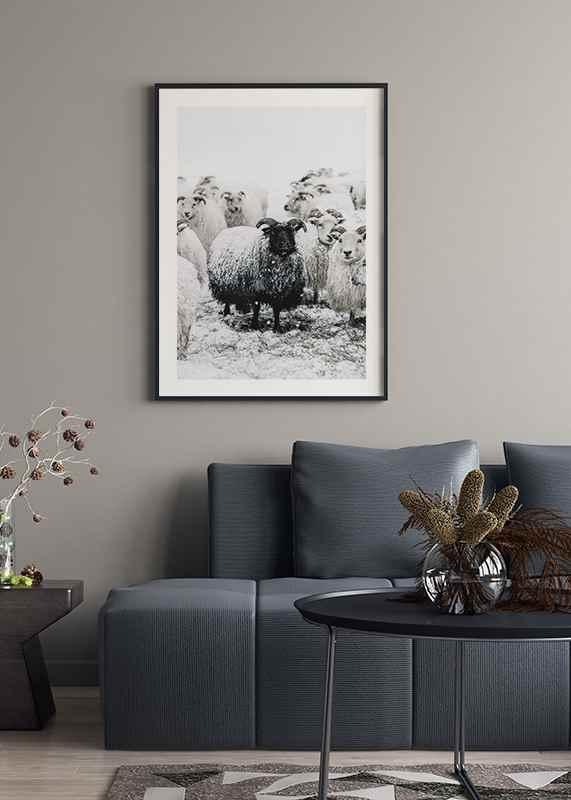 Winter Sheep-4