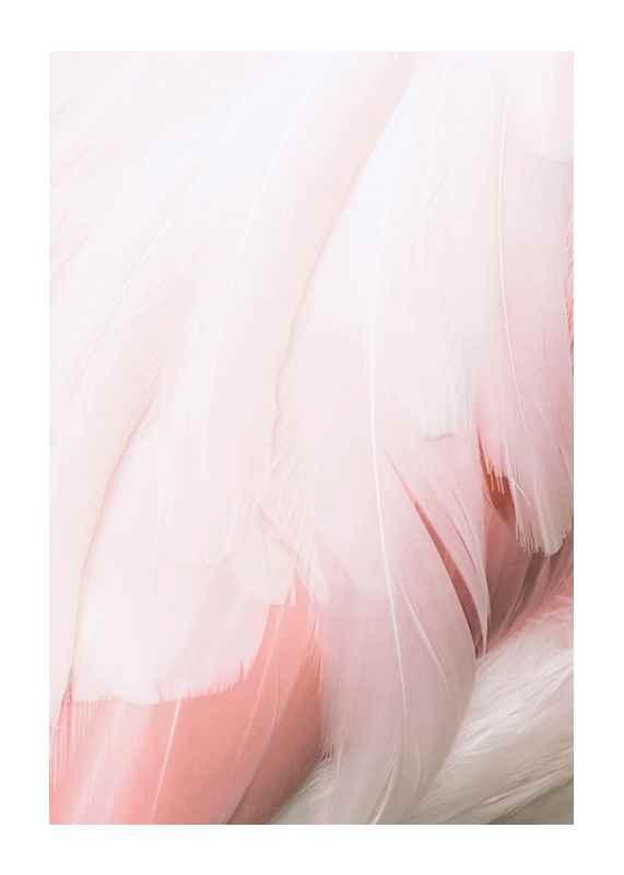 Flamingo Feathers-1