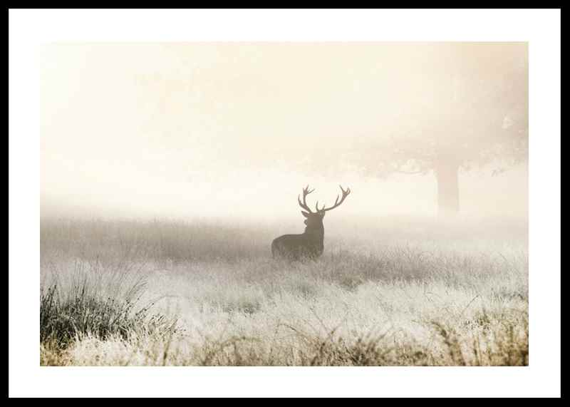 Deer In Mist-0