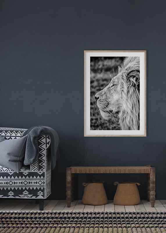 Male Lion Profile-4