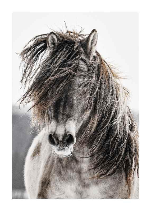 Wild Horse-1