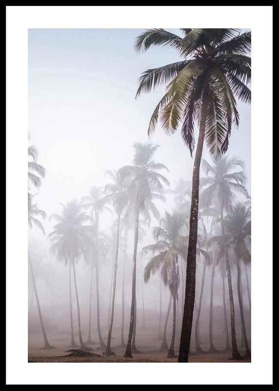 Palms In Haze