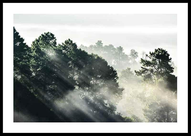 Sunlight Forest