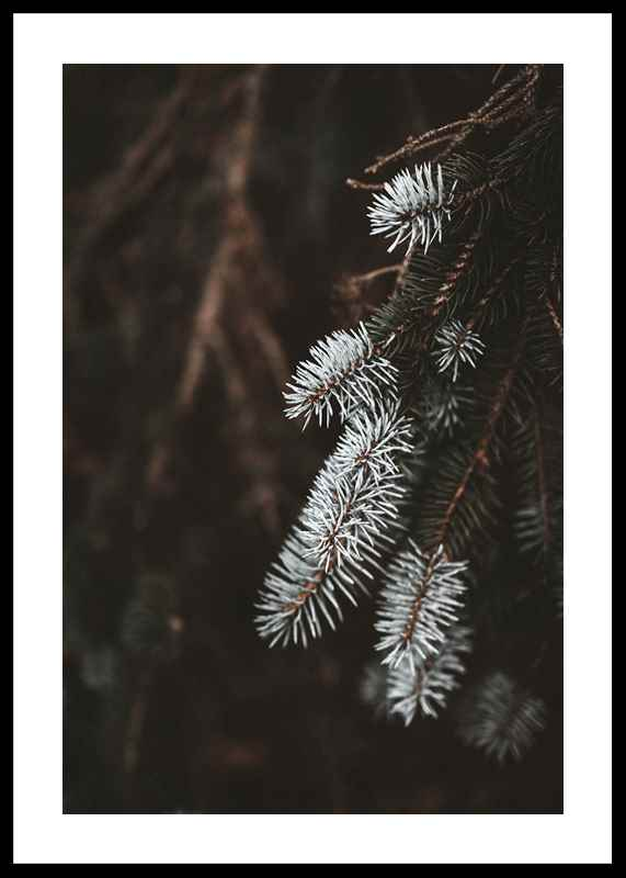 Fir Needle In White-0