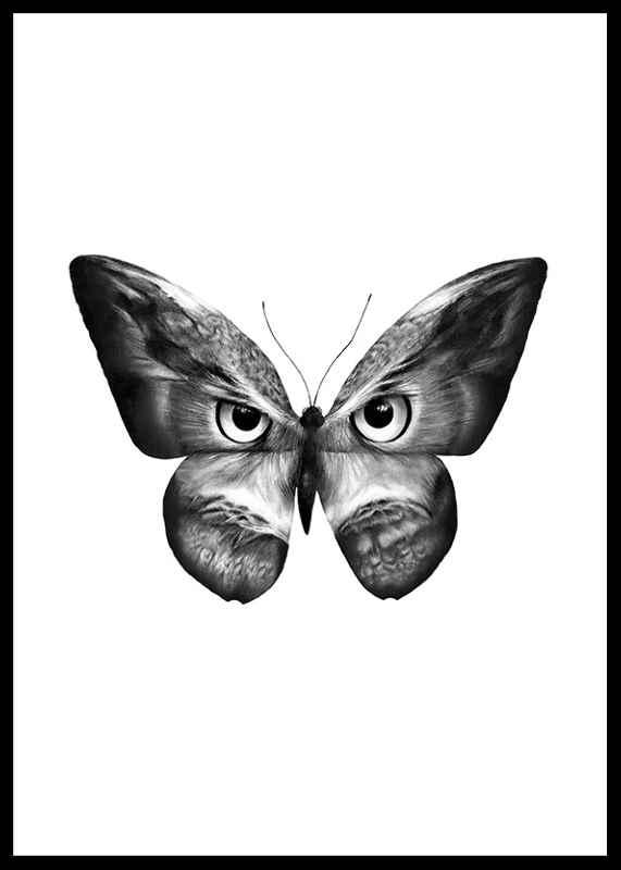Owlifly-0
