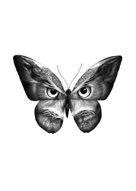 Owlifly-1