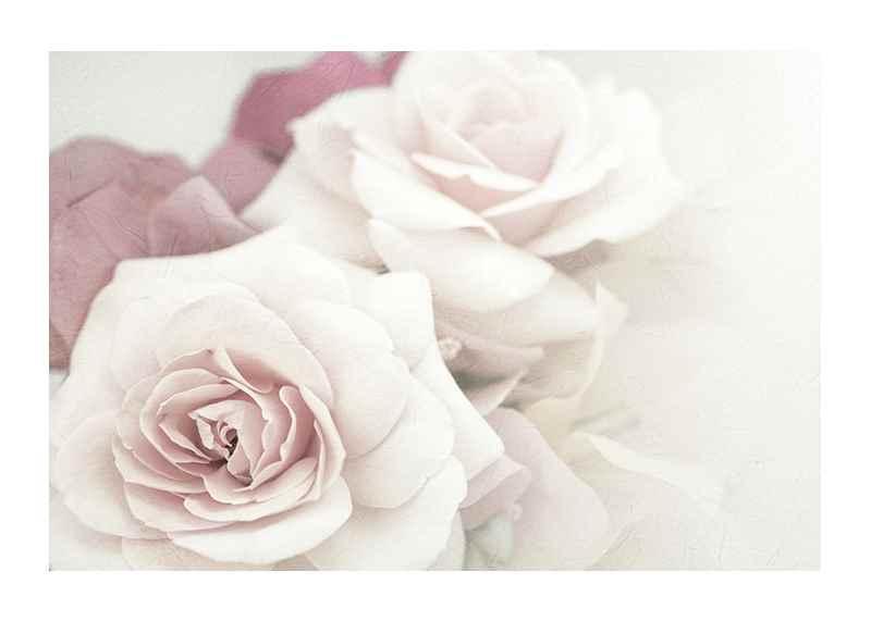 Perfect Pair Roses-1