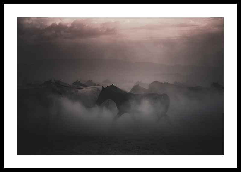 Sunset Horses-0