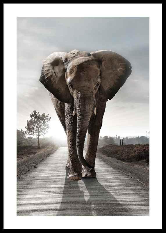 Elephant Road-0