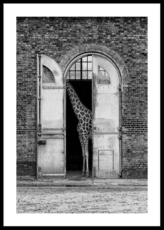 Hiding Giraffe-0
