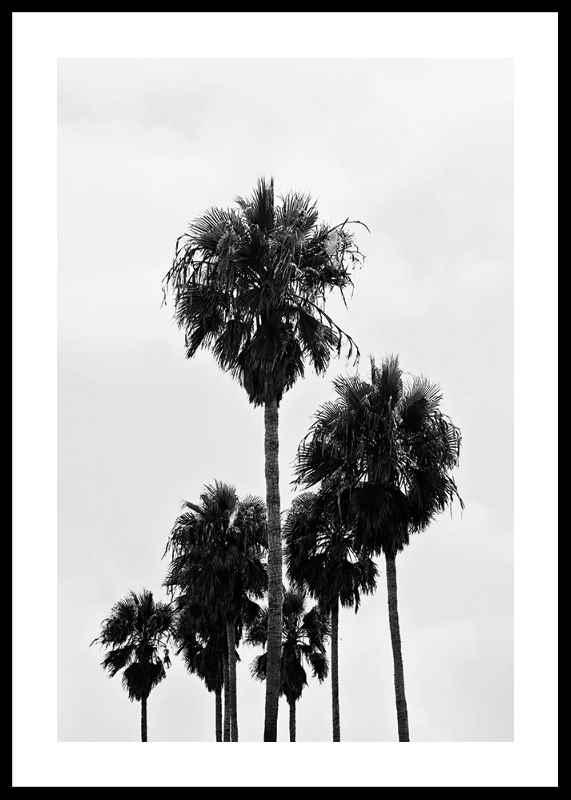 L.A Palm Trees-0