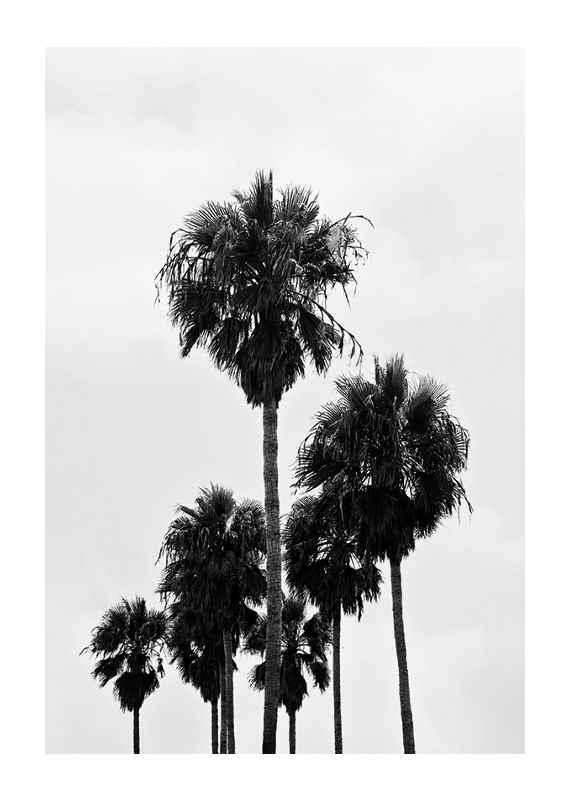 L.A Palm Trees-1