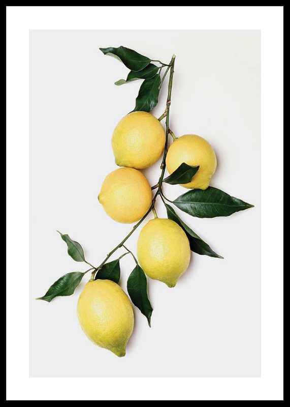 Lemons With Leaves