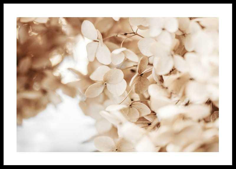 Dried Hydrangea No2-0