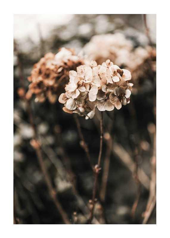 Hortensia Flower-1