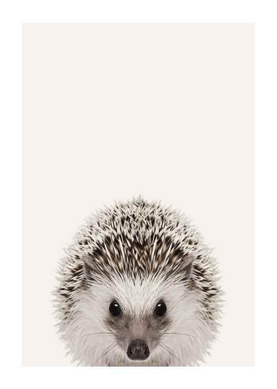 Baby Hedgehog-1