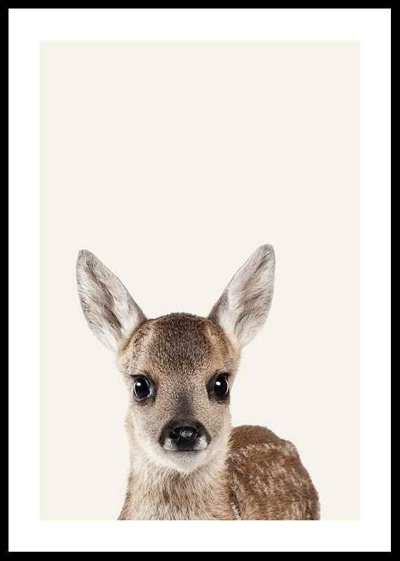 Baby Deer-0
