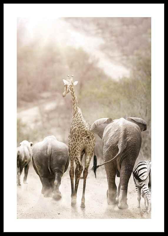 Wild African Animals-0