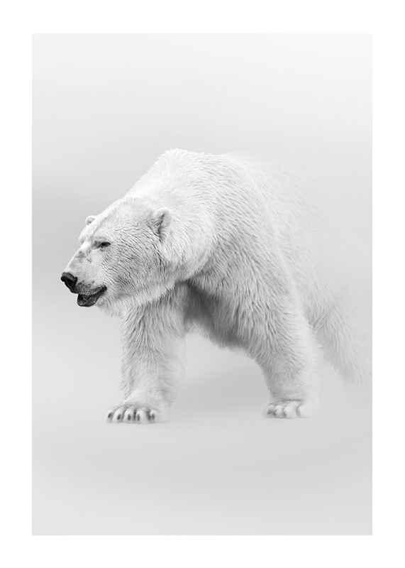 Faded Polar Bear-1