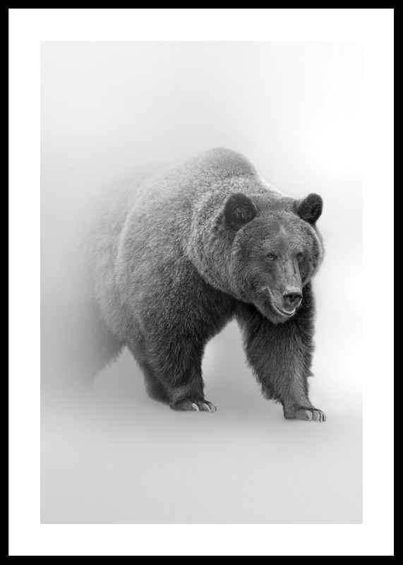 Faded Bear