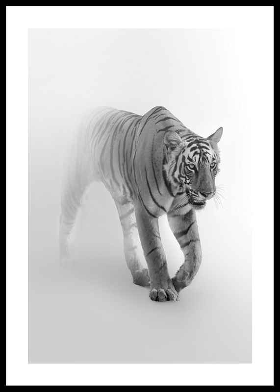 Faded Tiger
