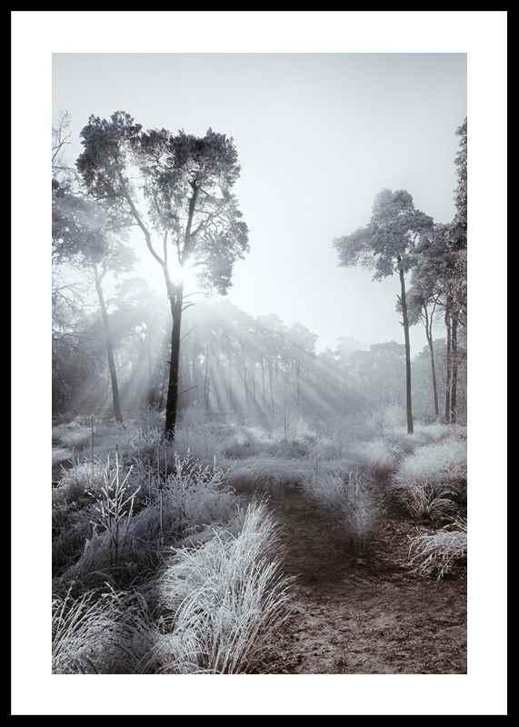 Winter Sunrays-0