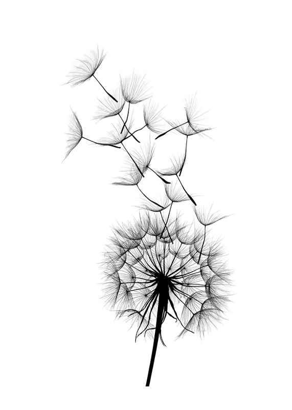 Dandelion Wish-1