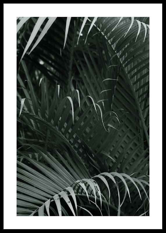 Palm Leaf No1-0