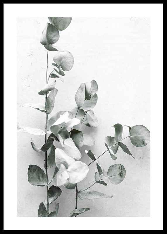 Eucalyptus No4