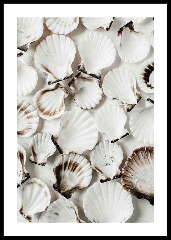 Sea Shells-0