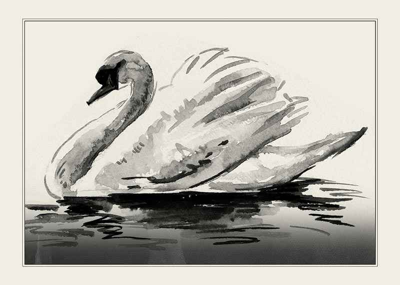 The Swan-1