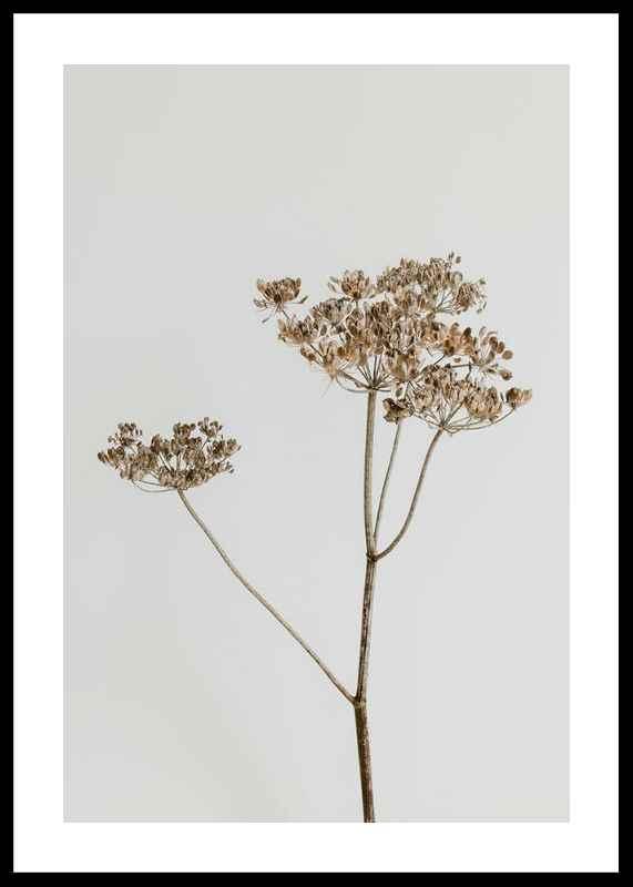 Single Dried Flower-0