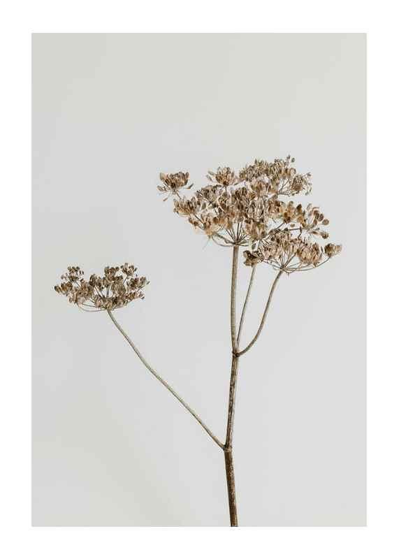 Single Dried Flower-1