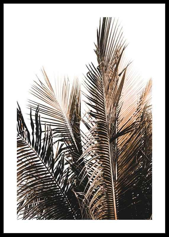Palm Leaves-0