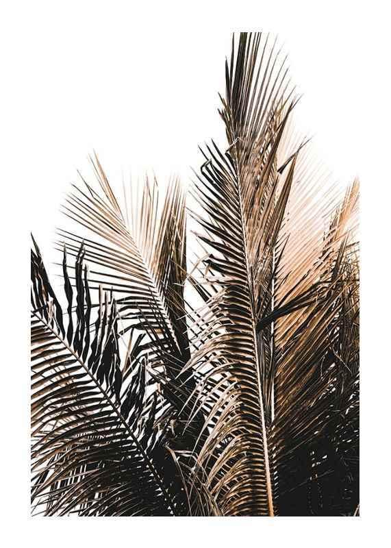 Palm Leaves-1
