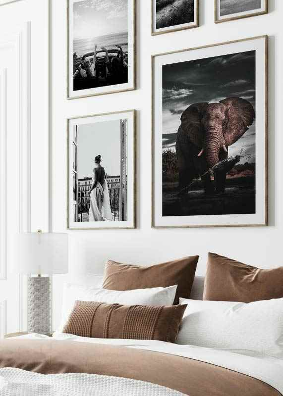 African Elephant-4