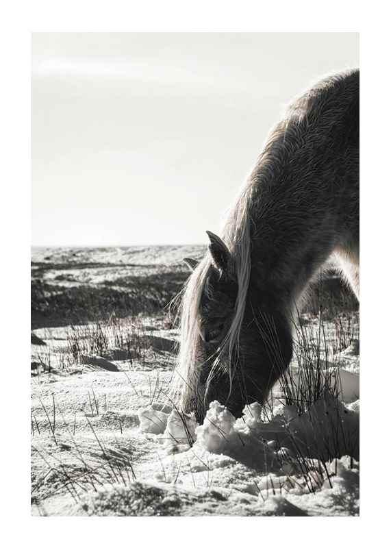Winter Horse-1
