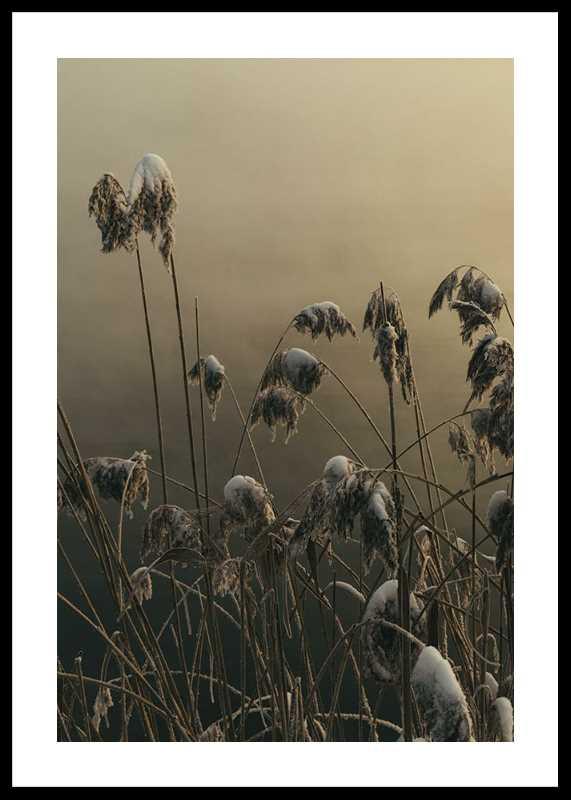 Winter Reed No1